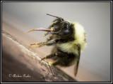 beesbugsdragonflies