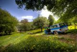 damash_2011