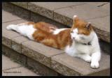 Stretch:  Cat Yoga