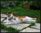 Alfred in the garden