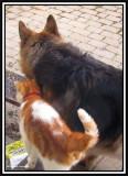 Pals: Alfred and Tasha