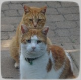 Alfred and George: Double trouble!!