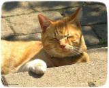 George, in the sun