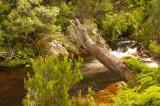 Stitt River, Rosebery