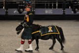 Lance Corporal Cruachan III : 90cm tall, 23yo