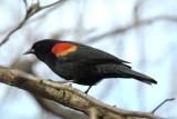 reifel_bird_sanctuary__sigma_170__500