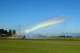 sprinkler_bows