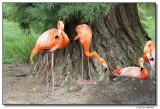 flamingos-14618-sm.JPG
