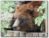 grizzly-14628-sm.JPG