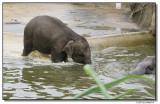 elephantswim-14737-sm.JPG