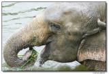 elephanteat-14710-sm.JPG