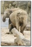 elephants3-14725-sm.JPG