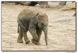 elephantbaby-14730-sm.JPG