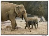elephant2-14732-sm.JPG