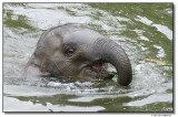 elephantswim-14707-sm.JPG
