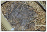 nest-0692-sm.JPG