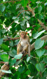 Noida jungle?