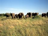 Elephant on the Landscape