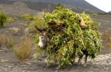 Camouflaged Donkey