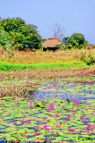 Lumbo Swamp