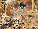 Jaipur Bird
