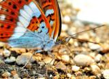 Butterfly's Eyes