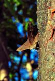 Butterfly on Tree