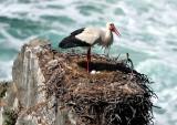 The Sea Storck