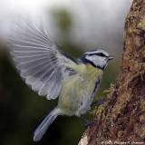 Oiseaux du jardin - Birds in the garden ::Gallery::