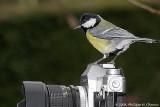 Mais qu'est-ce que Philippe veut prendre en photo ? - But what wants Philippe take a photo of?