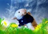 woolly jumper.jpg