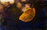 Untitled20.jpg