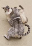 Feline Friendship