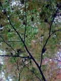 fractal leaves, Day 54