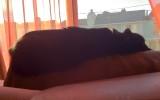 Day 58, flat cat
