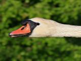 Ostrich - Flamingo