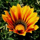 Flower sp