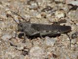gräshoppa1.jpg