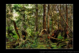 2011 - Vancouver Island - Pacific Rim National Park - Scooner Cove Trail