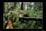 2011 - Vancouver Island - Pacific Rim National Park - Rainforest Trail