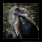 2008 - No Monkey Business
