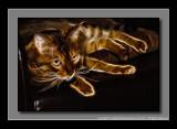 2012 - Ben the Cat