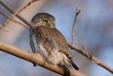 ALL BIRDS - Fåglar i systematisk ordning