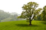 Goodrich Tree