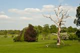 Hanbury Tree