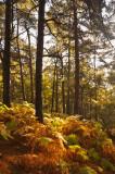 Licky Hills ferns