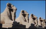 karnac temple sphinxes.jpg