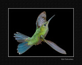 green crowned brilliant w blackmatted.jpg