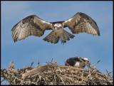 returning to nest.jpg