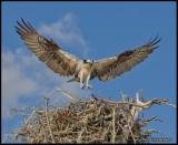 returning to nest2.jpg
